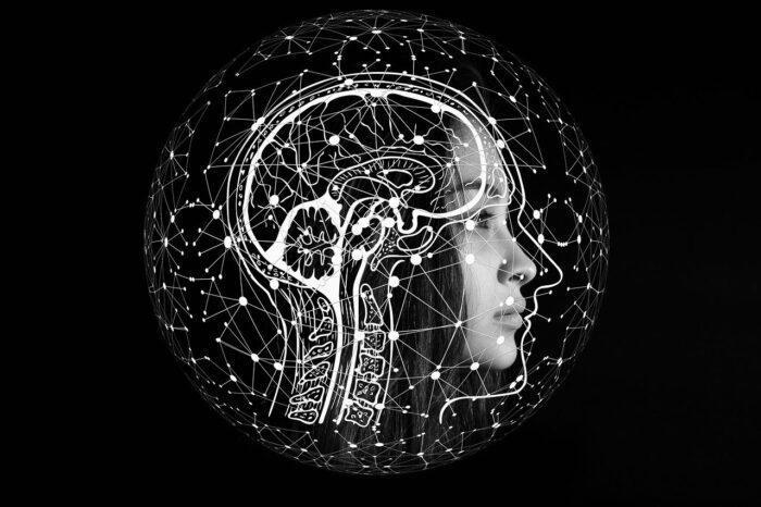 Cérebro como um organismo vivo