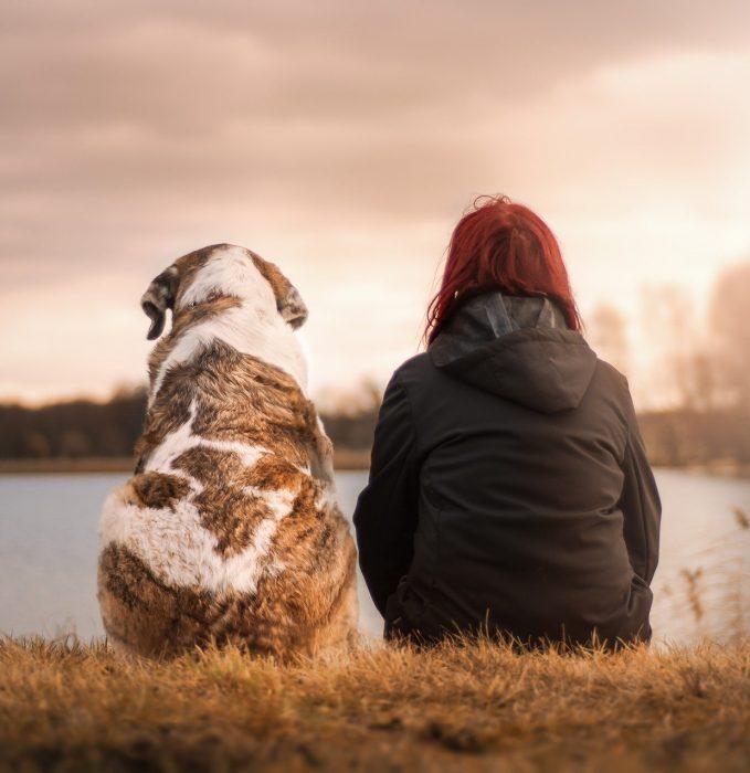 Os cães realmente nos tornam mais felizes?